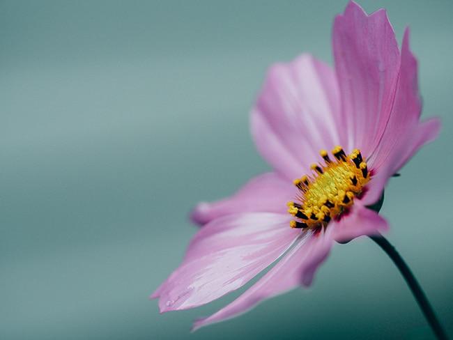 Priča o cvijetu